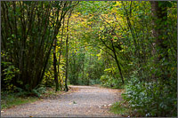 walking path in campbell valley park in langley - british columbia
