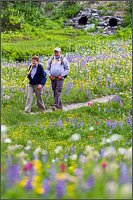 hikers and wildflowers around tipsoo lake at mount rainier national park in washington state usa