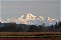 mount baker aka kulshan from pitt meadows - british columbia