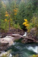 fall colours and the little qualicum river below the lower falls in little qualicum falls provincial park in the nanaimo regional district british columbia canada