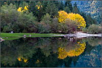 reflection of maple trees fall colours in silver lake provincial park