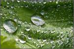waterbeads