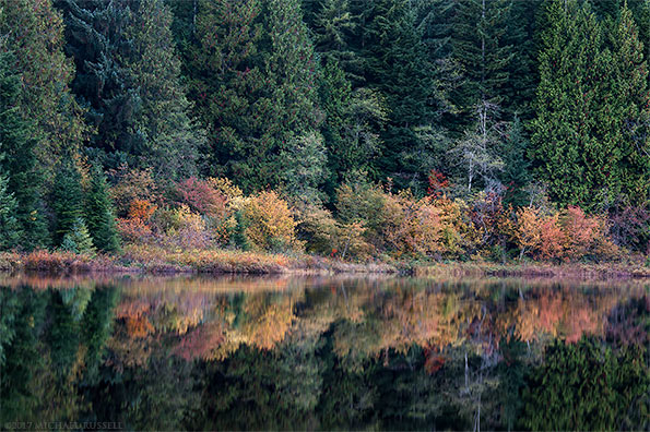 fall foliage reflected in rolley lake