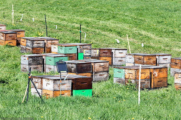 bee hives in a fraser valley abbotsford apiary