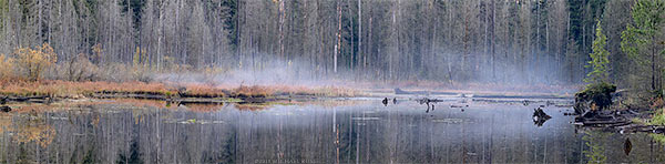 mist over the marsh at the south end of buntzen lake
