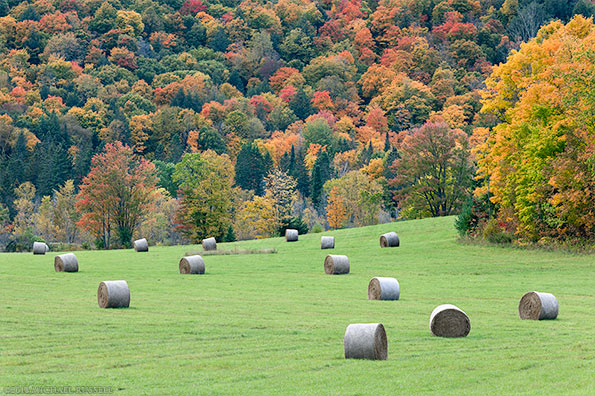 hay bales farm field quebec fall leaves