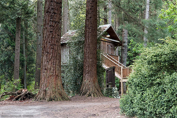 redwood park treehouse