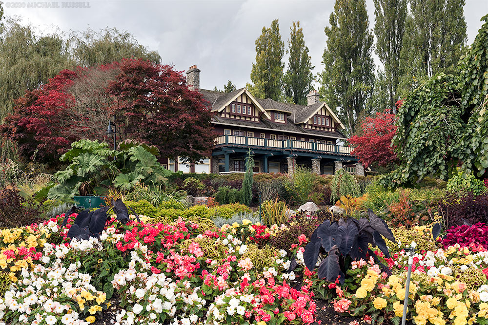 flowering annuals at century gardens with the burnaby art gallery at deer lake park