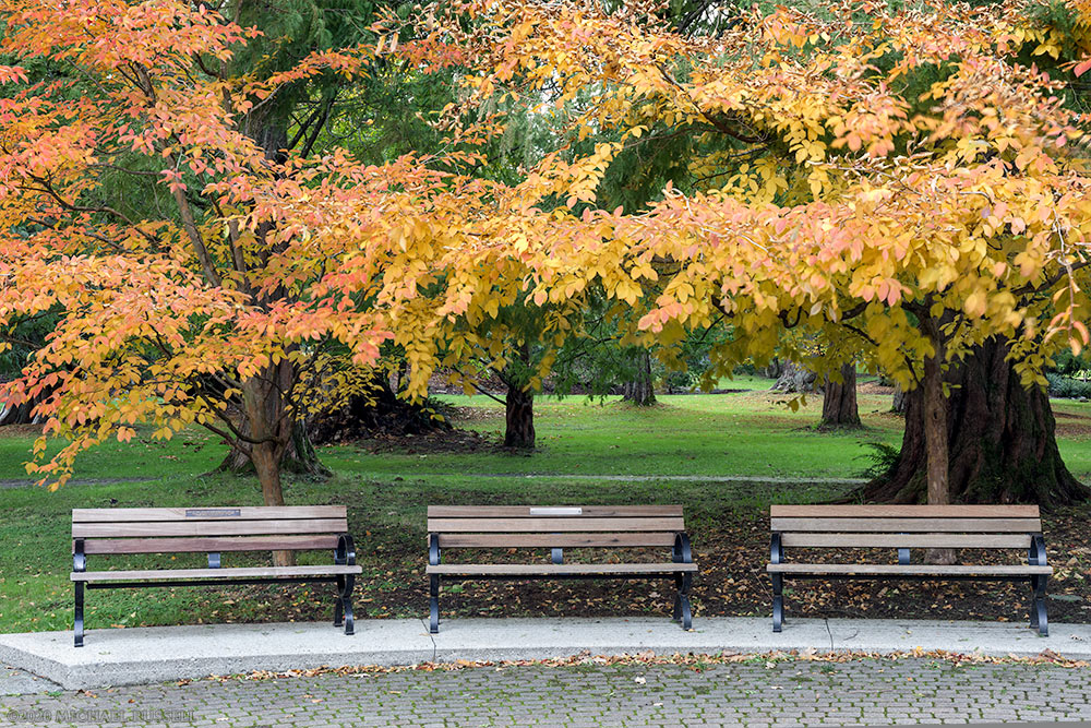 fall foliage and benches at painters circle in stanley park