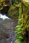 stonebridgeferns