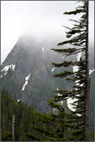 pinnacle peak subalpine fir