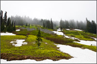 avalanche and glacier lily on mazama ridge