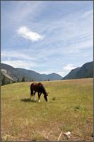 horsesinhedley