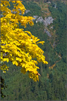 fall color at chillwack lake