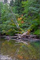 ohanapecosh river in grove of the patriarchs