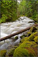silverhope creek near silver lake provincial park
