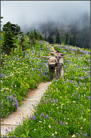 two hikers observe the wildflowers around tipsoo lake at mount rainier national park in washington state usa