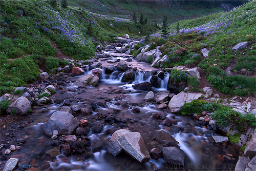 wildflowers and edith creek in mount rainier national park