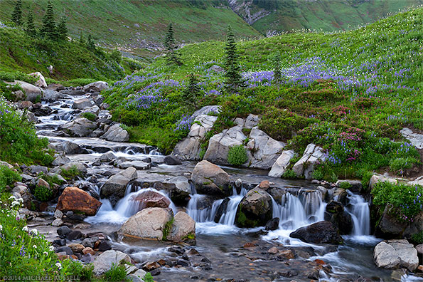 wildflowers and an edith creek waterfall in mount rainier national park