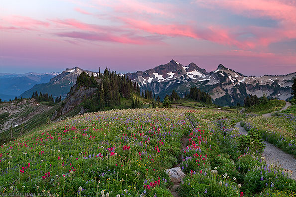 wildflowers and the tatoosh range from mazama ridges skyline trail in mount rainier national park