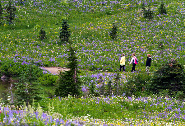 hiking in the wildflowers at mount rainier national park