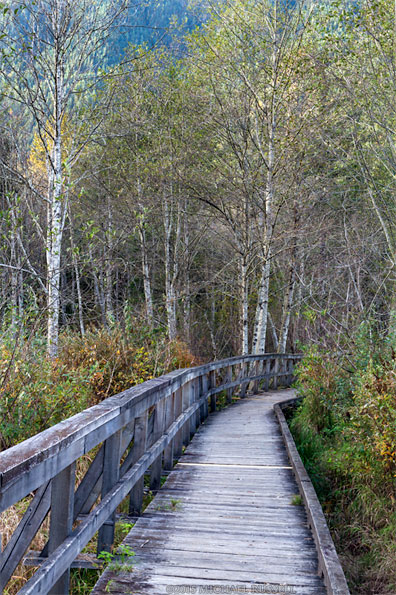 boardwalk at deer lake in sasquatch provincial park