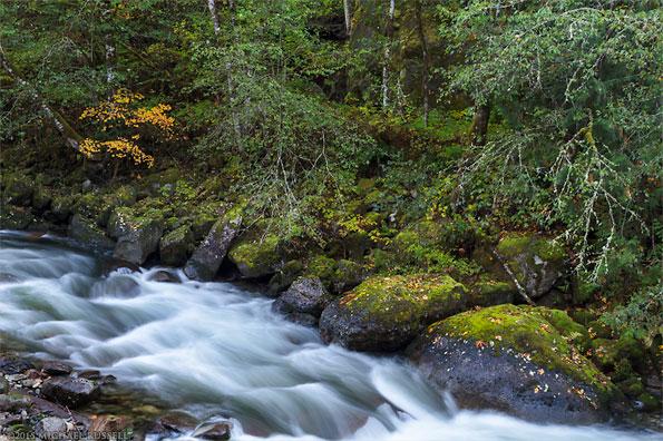 silverhope creek fall foliage colours