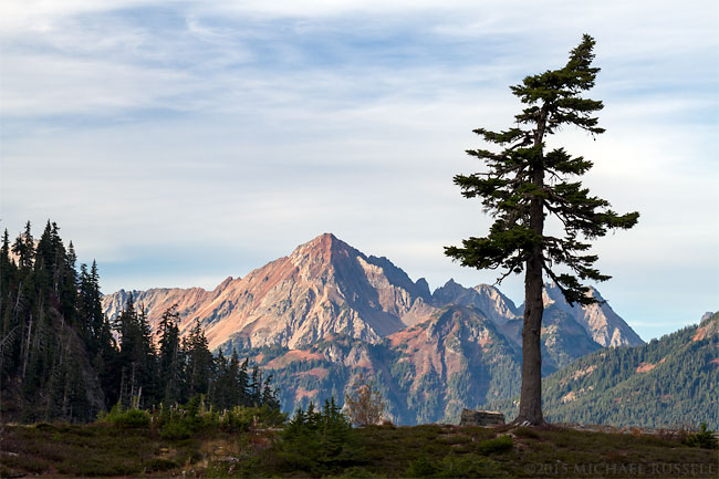 lone fir tree and mount larrabee from heather meadows