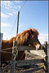 glenvalleyhorse